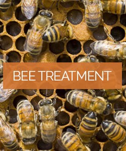 Bee Treatment