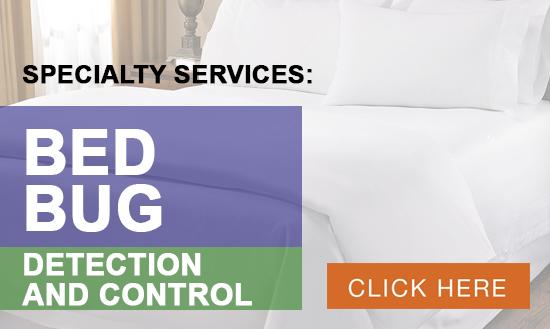 homepage-bedbug