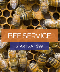 Bee Service