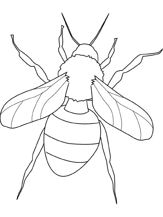 funny fly insects coloring pages - photo#44